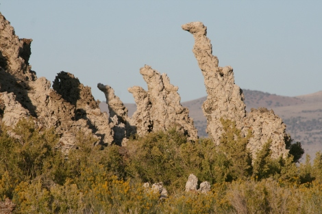 "the ""giraffes"" in the tufa"