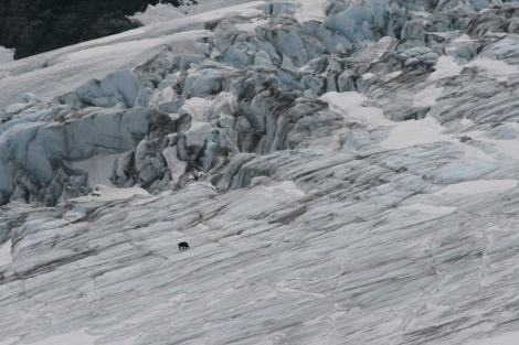 and approaches even bigger crevasses