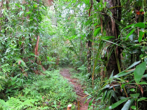 sometimes the trail would leave the beach and cut into the rainforest