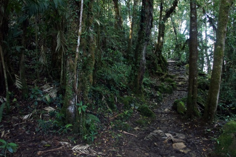 along the trail in Chirripo National Park